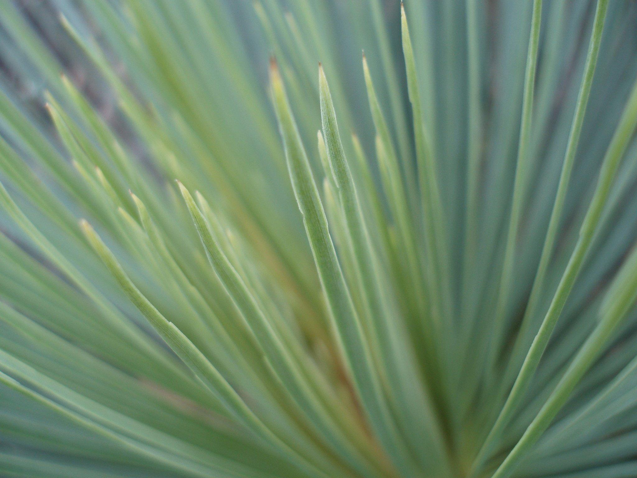 green_grassP1011513.jpg